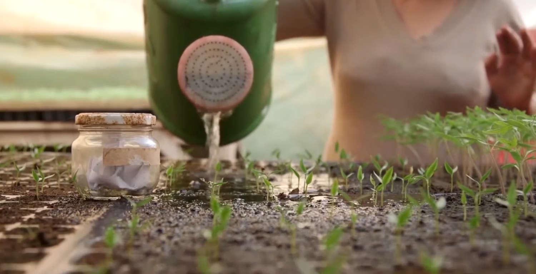 Temos que cuidar das nossas sementes